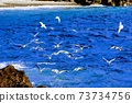 一群海鷗在海面附近飛行 73734756