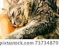 貓小睡 73734870