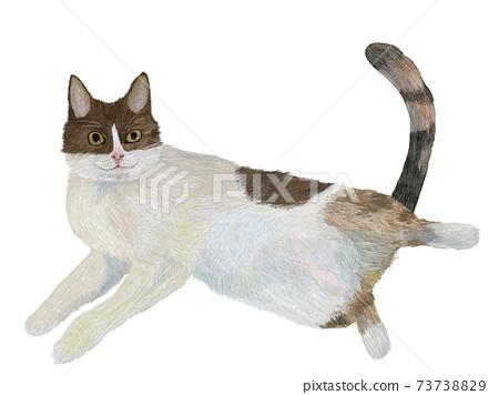 Hachiware,一種引誘人類的思想開放的貓 73738829