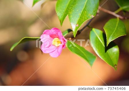 Tsubaki's Flower Cherry Red Skin Assistance 73745406