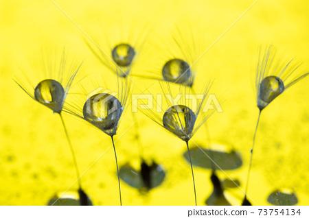 노란색 배경에 민들레 솜털을 타고 물방울 73754134