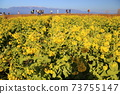 나기사 공원의 유채 꽃과 히라 산맥 [시가현 모리야마시] 73755147