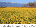 나기사 공원의 유채 꽃과 히라 산맥 [시가현 모리야마시] 73755152