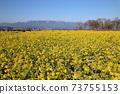 나기사 공원의 유채 꽃과 히라 산맥 [시가현 모리야마시] 73755153