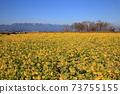 나기사 공원의 유채 꽃과 히라 산맥 [시가현 모리야마시] 73755155