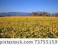 나기사 공원의 유채 꽃과 히라 산맥 [시가현 모리야마시] 73755159