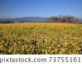 나기사 공원의 유채 꽃과 히라 산맥 [시가현 모리야마시] 73755161