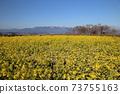 나기사 공원의 유채 꽃과 히라 산맥 [시가현 모리야마시] 73755163