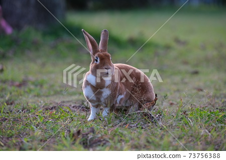 兔子在兔子 73756388