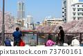 春季2月櫻花盛開的川邊 73760161