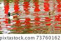 春天的池塘 73760162