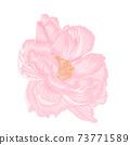 Single beautiful light pink peony isoleted hand draw procreate 73771589