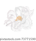Single beautiful white peony isoleted hand draw procreate 73771590