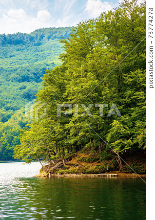 lake among beech forest in summer. beautiful nature landscape in mountains. vihorlat national park on a sunny day. 73774278