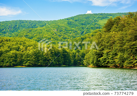 lake among beech forest in summer. beautiful nature landscape in mountains. vihorlat national park on a sunny day. 73774279