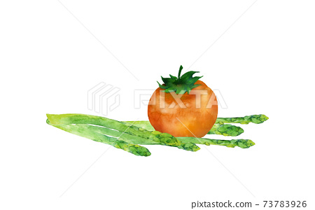 Watercolor illustration of tomato and green asparagus 73783926