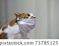 마스크 쓴 고양이 73785125