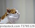 마스크 쓴 고양이 73785126