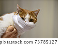 마스크 쓴 고양이 73785127