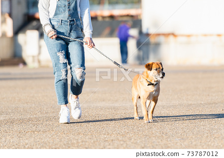 Dog and young woman for a walk 73787012