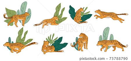 Leopard or cheetah running and hunting animal 73788790