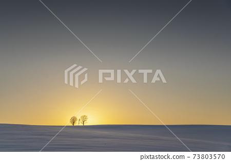 美瑛冬季風景與親子樹 73803570