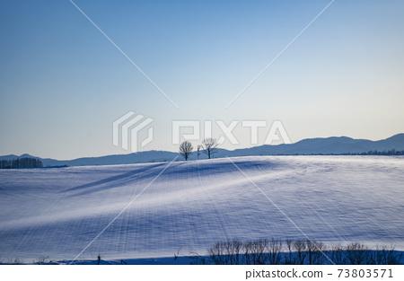美瑛冬季風景與親子樹 73803571
