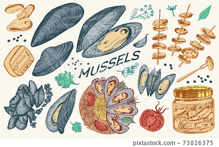 Sea mussels in vintage retro style. Nautical molluscs. Ocean food. Vector illustration. Hand drawn 73816375