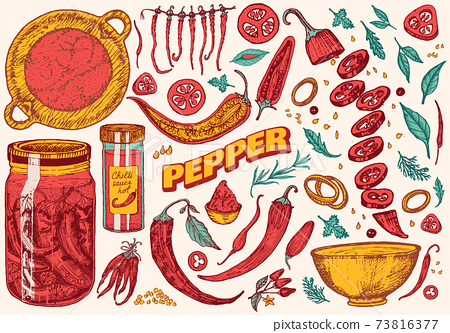 Red hot chili peppers in vintage style. Salad ingredients. Farm vegetable. Vector illustration. Hand 73816377