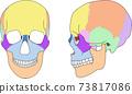頭骨,縫合線,可用文字 73817086