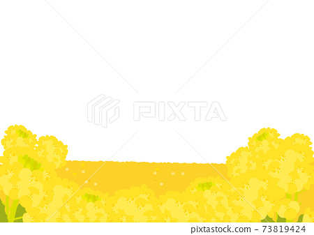 油菜田 73819424