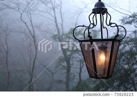 森林裡的一盞燈似乎出現在歐洲童話中 73820223