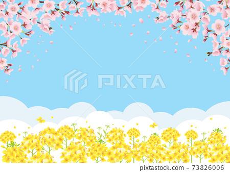 櫻花和油菜田間背景圖的藍藍的天空背景(水平的A3 / A4比率) 73826006