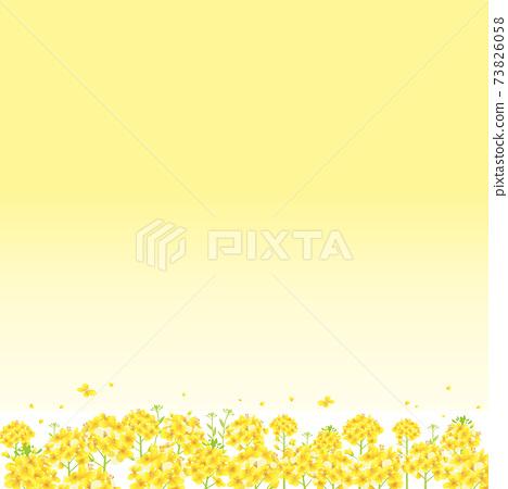 Rape blossoms, one side yellow Rape blossom field background illustration (square) 73826058