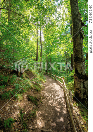 trail through forest in summertime. trees an fence along the path. roots stick from the ground. nature travel concept, explore the wilderness 73846140