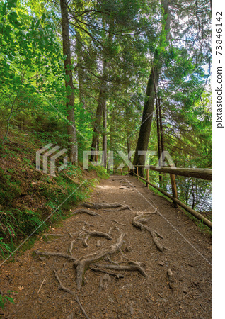 trail through forest in summertime. trees an fence along the path. roots stick from the ground. nature travel concept, explore the wilderness 73846142