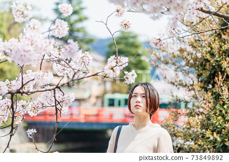 A young woman watching cherry blossoms during spring sightseeing in Kyoto 73849892
