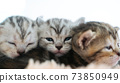Portrait cute kitten cat family sibling sleeping together 73850949