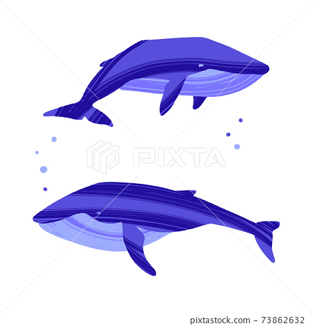 Two whales. Ocean animals in trendy flat style. 73862632