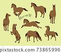 馬的各種姿勢 73865996