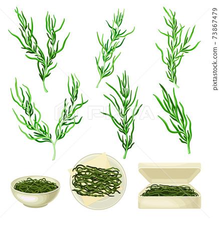 Dark Green Hijiki Seaweeds or Sargassum as Sea Vegetable in Bowl and Package Vector Set 73867479