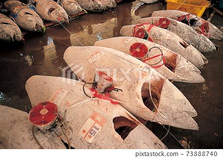Frozen tuna on the market 73888740
