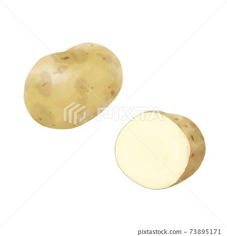 土豆的矢量水彩插圖 73895171