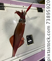 Red squid 73895920