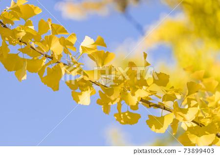 가을 이미지 은행 업 배경 자료 73899403