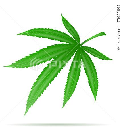 cannabis marijuana leaf medicinal drug legalization vector illustration 73905847