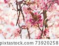 Blooming sakura tree branch, abstract spring background 73920258