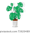 A rather lovely simple illustration of the classic monstera deliciosa. 73920489