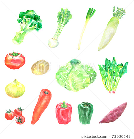蔬菜用水彩繪製的插圖集 73930545