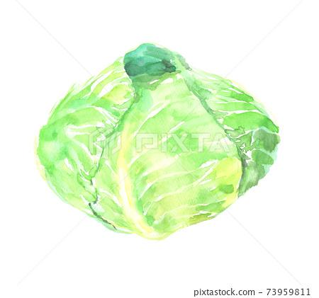水彩畫的白菜插圖 73959811